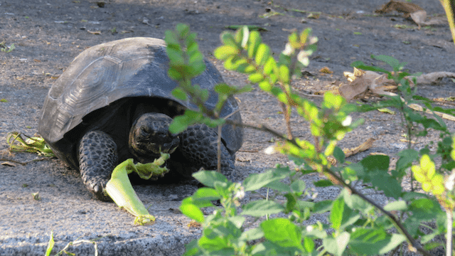 Galapagos Islands-Haiku to Life by Lauren Feiner