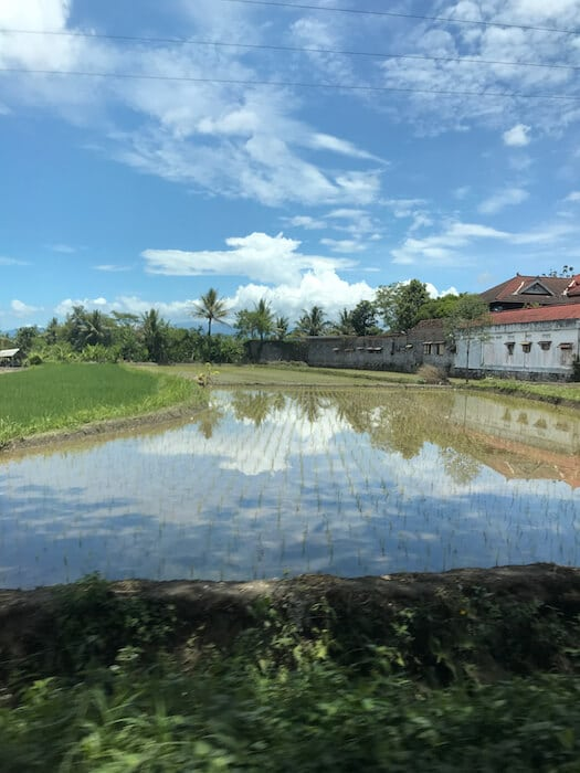 Rice Paddy Reflection in Yogyakarta Indonesia