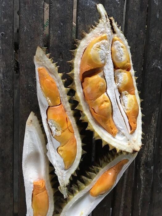 Durian. Not for the faint of heart. Best things to do in Yogyakarta. Merapi Volcano Tour. Yogyakarta Day Tour