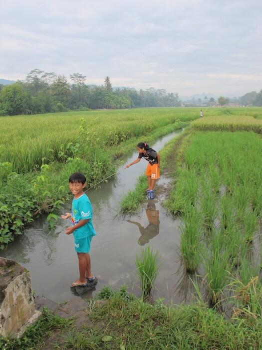 Rice Paddies near Rumah Dharma.Best things to do in Yogyakarta. Merapi Volcano Tour. Yogyakarta Day Tour