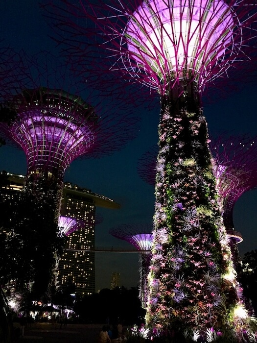 Super Trees at night Crazy Rich Asians Singapore