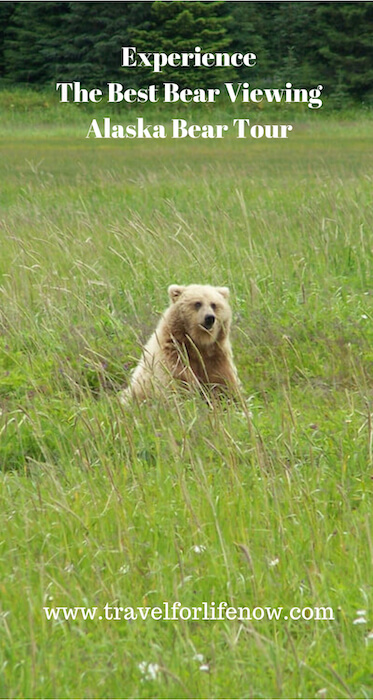 Dreaming of Seeing Bears Up Close and in the Wild? Take an Alaska Bear Tour. Come with us to to Silver Salmon Creek Lodge for Bear Viewing.