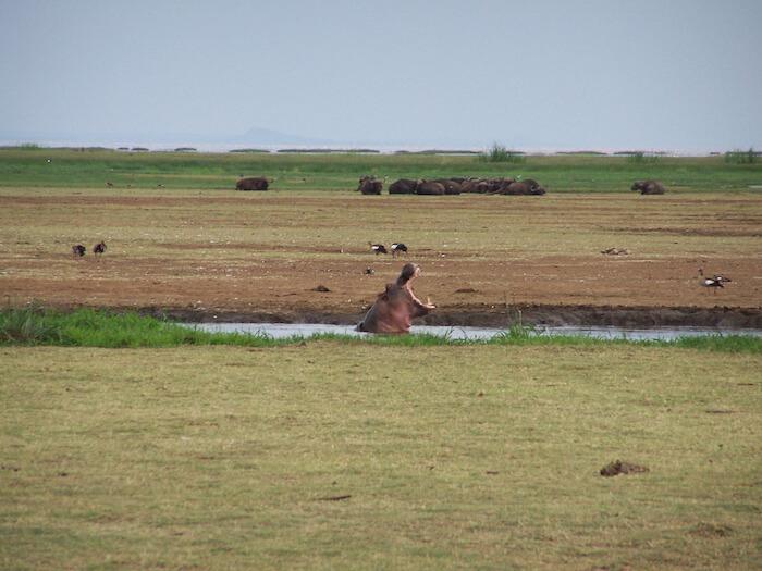 African Safari Photography