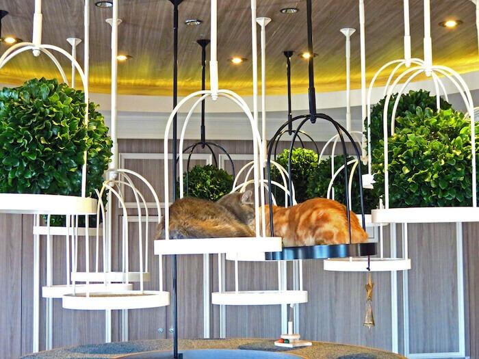 Cat Cafe, Tokyo. Photo by Sylvia Van Overvelt, Wapiti Travel